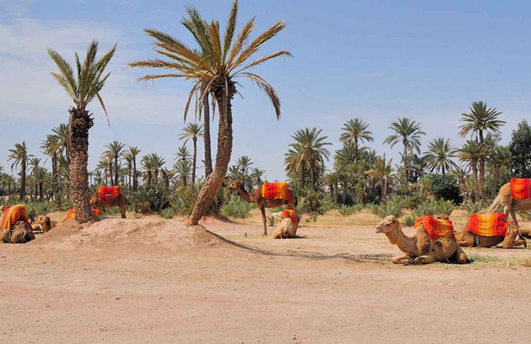 Marrakech paseo en camello