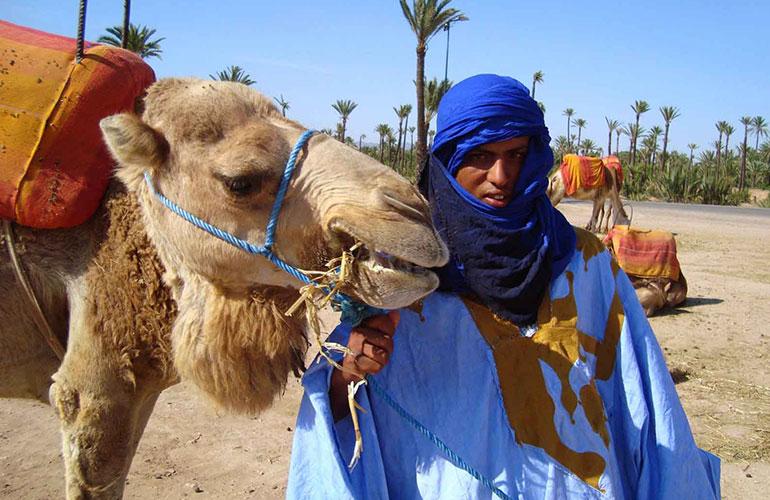 Paseo en camello en el palmeral de marrakech